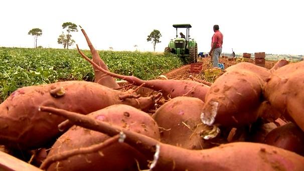 Fronteira do Brasil deste sábado (24) fala o mercado da batata-doce (Foto: Reprodução TV Fronteira)