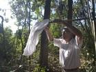Ufes recolhe amostras de mosquitos para investigar febre amarela