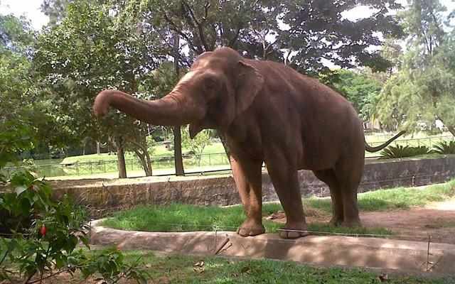Elefante Tempo (Foto: Rede Globo)