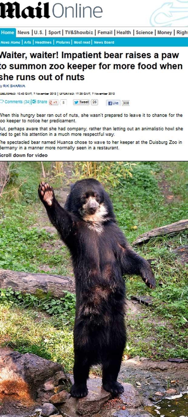 Ursa 'educada' acena para pedir comida em zoológico alemão  (Foto: Reprodução)