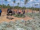 Trabalhadores resgatados não tinham banheiro, água potável e alojamento