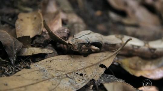 Projeto cataloga mais de 80 espécies de animais em área de Piratininga