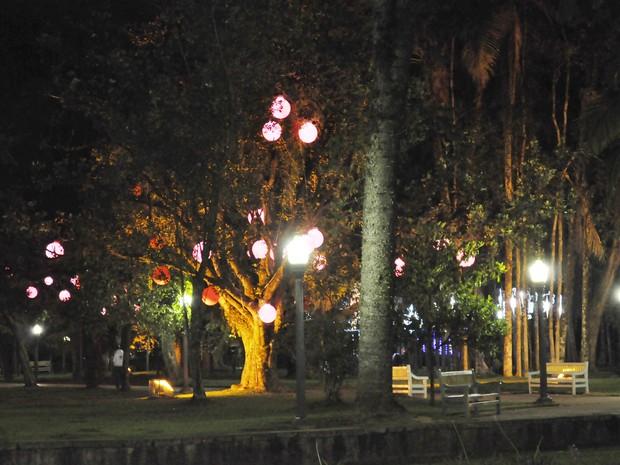 Árvores ganharam colorido especial neste Natal em Poços de Caldas (MG). (Foto: Lúcia Ribeiro/G1)