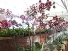 Parque Dona Lindu realiza Festival de Orquídeas com 20 mil flores