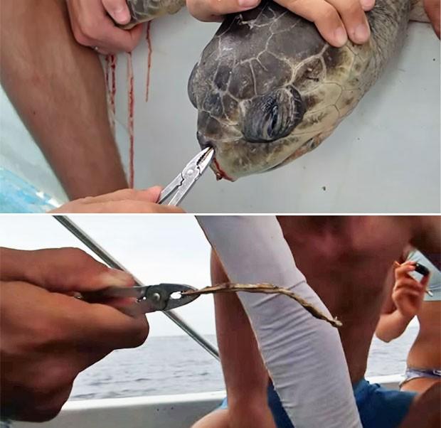 Canudo é tirado de narina de tartaruga (Foto: Reprodução/Youtube/COASTS/Christine Figgener )