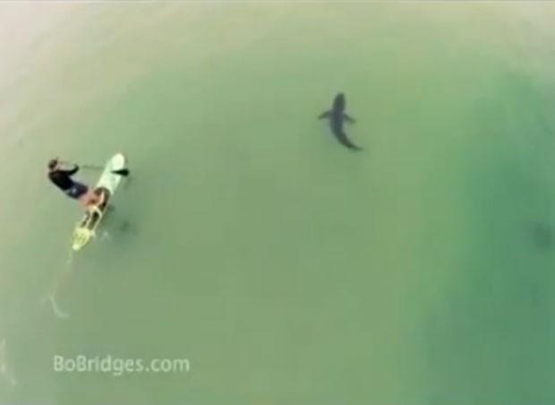 Jovem pratica  stand Up paddle ao lado de tubarão em praia da Califórnia (Foto: Reprodução/LiveLeak/bigEcod)