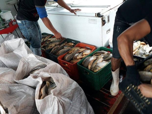apreensão, pescado, orla, macapá, amapá, batalhão ambiental (Foto: Divulgação/Polícia Militar)