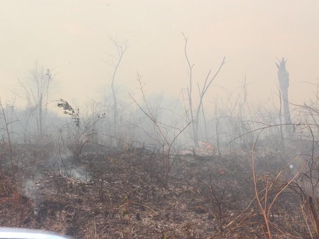 Vegetação devastada pelo fogo em Teresina (Foto: Ellyo Teixeira/G1)