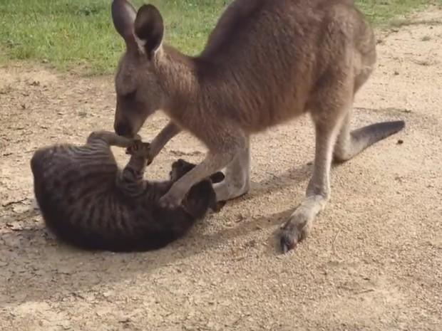Cena foi filmada em fazenda em Bega, na Austrália (Foto: Reprodução/YouTube/P Ces)