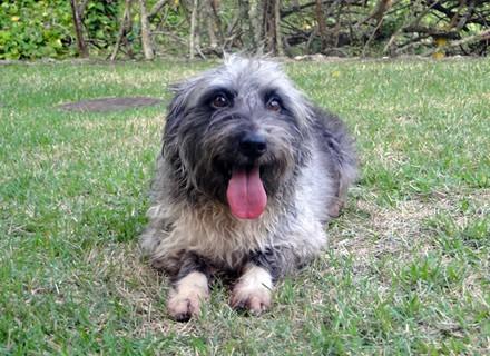 Encontrada na rua, cachorrinha Nina faz participação em Passione