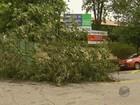 Alagamentos e queda de árvores são registrados após chuva no Sul de MG