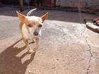 Cachorro morre após pauladas e dona acusa funcionária dos Correios