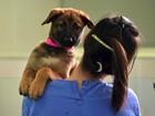 Fundação faz clones de pets que já morreram na Coreia do Sul