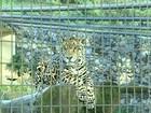 Zoológico de Sorocaba mostra bastidores em programação de férias