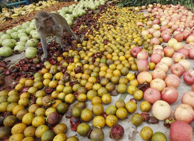 Dezenas de frutas estão à disposição de primatas em festividade na Tailândia (Foto: Chaiwat Subprasom/Reuters)