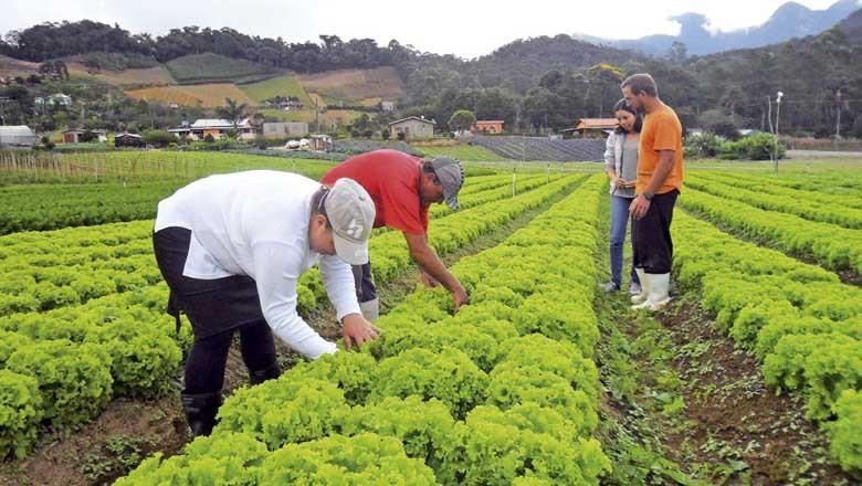 plantacao-de-alface-agricultor-produtor-rural-agricultores-hortalica-hortifruti-nova-fribugo (Foto: GERJ/CCommons)
