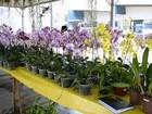 Exposição de orquídeas reúne mais de 800 espécies em Ariquemes, RO