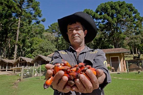 João Donizete com um punhado de pinhões nas mãos  (Foto: © Haroldo Castro/Época)