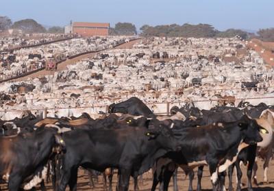 criacao_boi_confinamento (Foto: Ernesto de Souza/Ed. Globo)