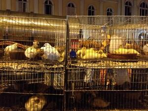 Aves são salvas em incêndio no Mercado Público (Foto: Felipe Truda/G1)