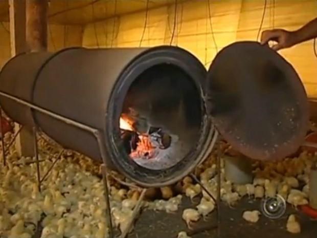 Agricultores usam aquecedores para proteger aves do frio (Foto: Reprodução / TV TEM)