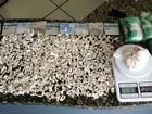 Menor é apreendido com 570 sacolés de cocaína em casa de Cabo Frio, RJ
