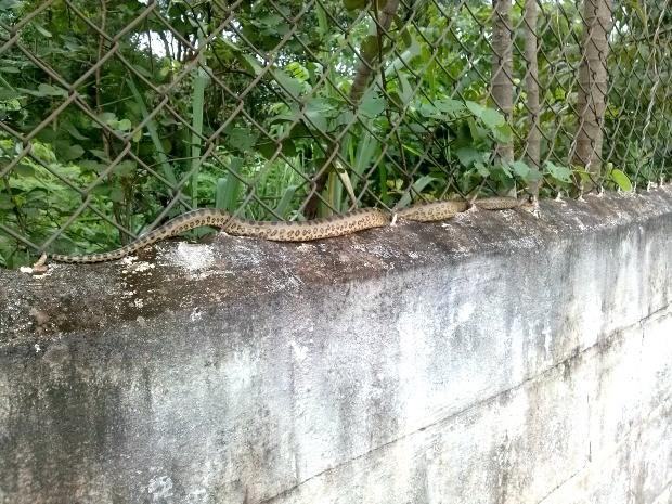 Cobra foi vista quando jovens faziam caminhada na calçada ao lado do muro (Foto: Jean Victor da Costa/ Arquivo Pessoal)