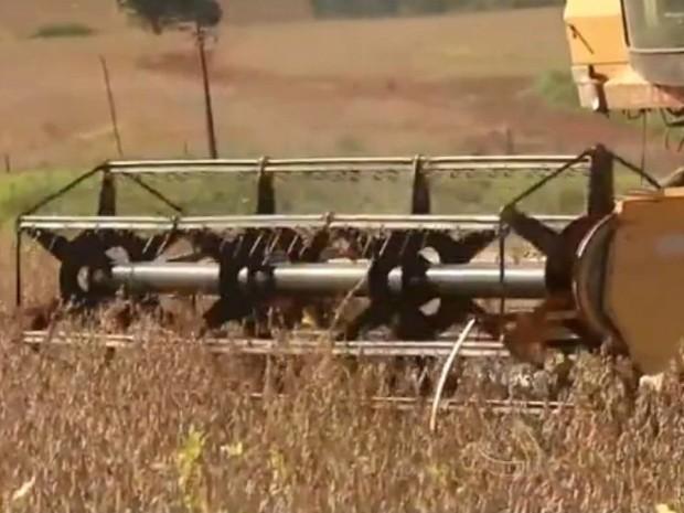 Colheita de soja em Mato Grosso do Sul está próxima se ser concluída (Foto: Reprodução/TV Morena)