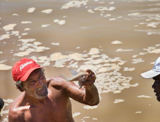 Pescadores resgatam peixes no Rio Doce em Colatina, Espírito Santo (Foto: Camila Pastorelli)