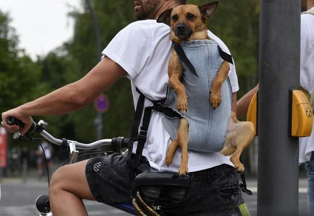 Um ciclista chamou atenção ao ser flagrado levando seu cãozinho em uma mochila jeans nas costas, nesta quinta-feira (7), em Berlim, na Alemanha (Foto: Tobias Schwarz/AFP)