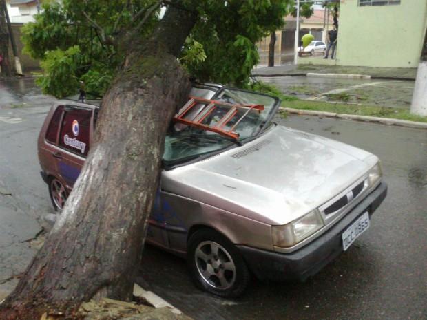 Árvore caiu após o vento forte desta quinta-feira (5) (Foto: Jamie Rafael / TV TEM)
