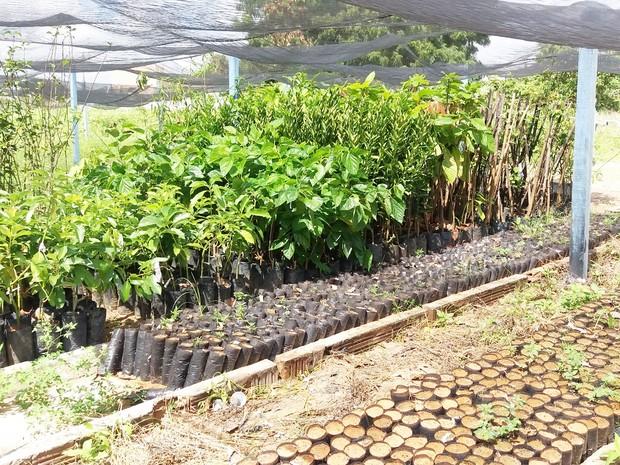 Extação Experimental de Apodi vai receber 900 mudas de variadas espécies de maçã, pera, cacau, pêssego, amora, abacate, caqui, uva e tangerina (Foto: Divulgação/Emparn)