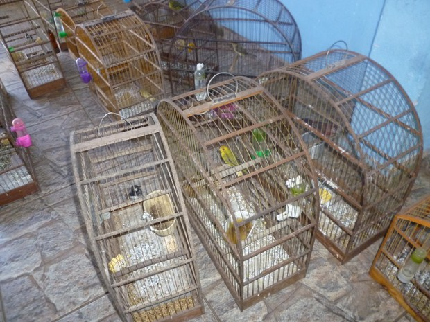 Polícia também apreendeu 15 pássaros silvestres  (Foto: Divulgação/ Polícia Ambiental)