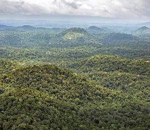 Área de floresta no Amapá (Foto: IEF/Governo do Amapá)