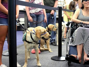 Cães têm aulas para aprender a viajar de avião no estúdio de cinema Air Hollywood (Foto: AP Photo/Air Hollywood, Sandra Lollino)