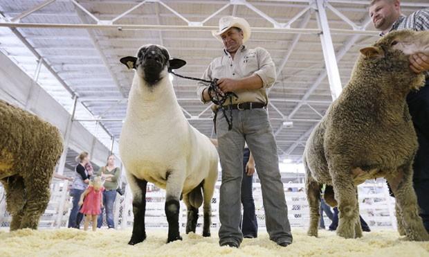 Zeus (centro) conquistou o título de competição na feira agrícola de Iowa  (Foto: Charlie Neibergall/AP)