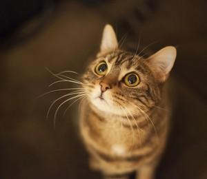 gato (Foto: Thinkstock)