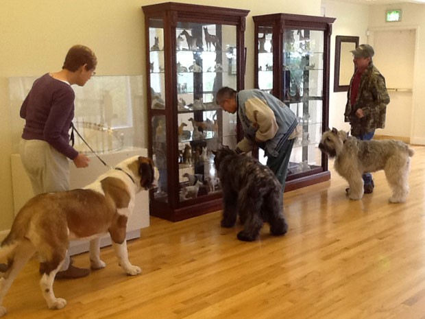 O museu permite a visita de animais (Foto: American Kennel Club Museum of the Dog, Diane Saltzman/AP)