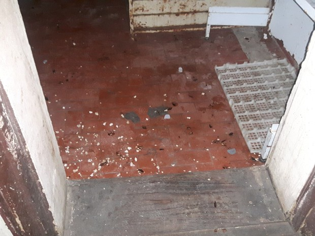 Padaria Aninha de Irajpa tinha baratas mortas (Foto: Divulgação/Procon-RJ)
