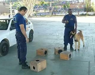 Cães são treinados para identificação de drogas em Barra Mansa (Foto: Reprodução RJTV 2ª Edição)