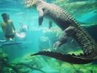 Turistas simulam até beijo em mergulho com crocodilos na Austrália