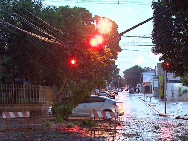 Galhos caíram sobre rede elétrica na Avenida Nove de Julho, em Ribeirão Preto (Foto: Fábio Júnior/EPTV)