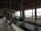 Operários resgatados em situação de escravidão no CE dormiam em curral
