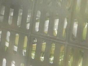 Alimentos foram apreendidos pela vigilância (Foto: Reprodução/TV TEM)