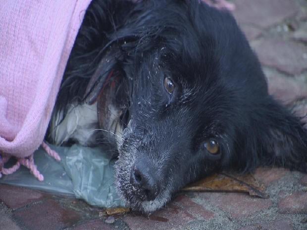 Cachorro é atropelado em Santos, SP (Foto: Reprodução/TV Tribuna)