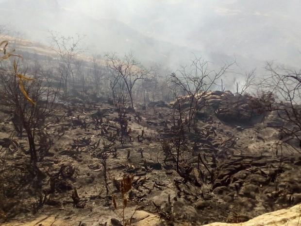 Incêndio já atingiu 50 hectares de mata nativa (Foto: Felipe Valentim/TV Paraíba)