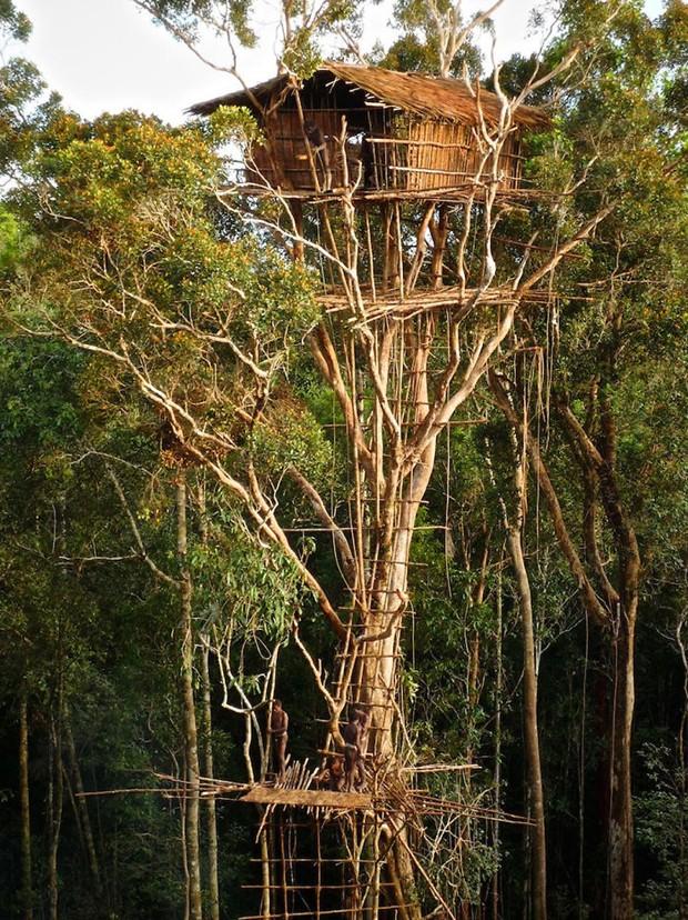 As casas na árvore mais lindas do mundo (Foto: Reprodução)