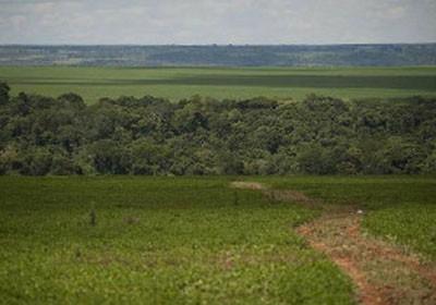fazenda_sustentavel_desmatamento (Foto: Acervo/Ed. Globo)