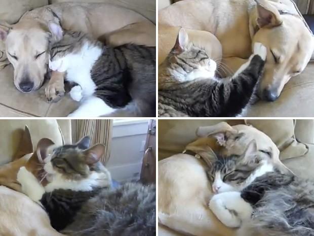 Stewart, o gato, não cansa de fazer carinho em seu amigo canino, Myrtle. (Foto: Reprodução)