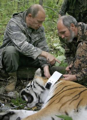 Foto de 2008 mostra Putin ao lado de tigre, que havia sedado por pesquisadores (Foto: Alexei Druzhinin/RIA-Novosti/AP)